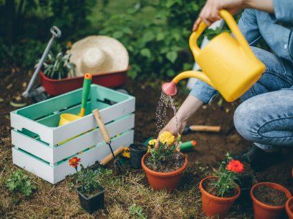 7 plantas venenosas que pode ter no seu jardim sem saber