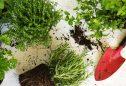Dicas do que plantar numa horta vertical exterior ou interior
