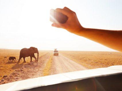 Sonha em fazer um safari? Veja dicas e destinos para começar a planear