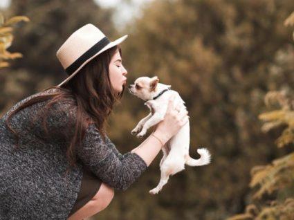Novidade: a H&M lança colecção de roupa para cães