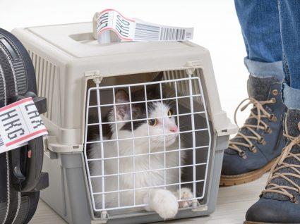 Voar com animais de estimação: tudo o que precisa de saber