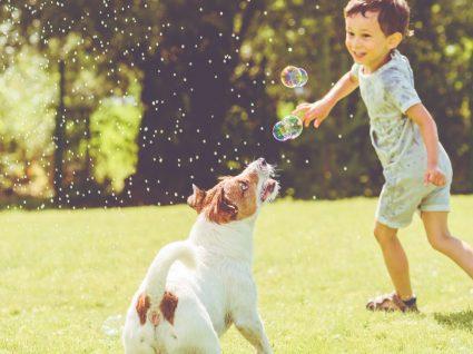 5 benefícios de viver com animais de estimação