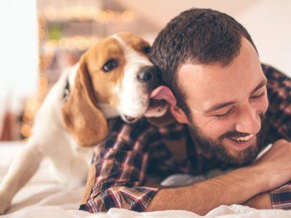 Sabe porque os cães ladram? Conheça bons 12 motivos!