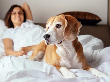Dormir com animais de estimação: sim ou não?