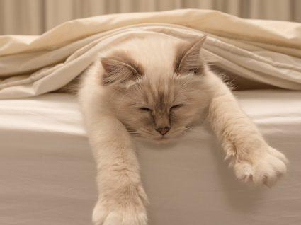Descubra porque os gatos dormem tanto