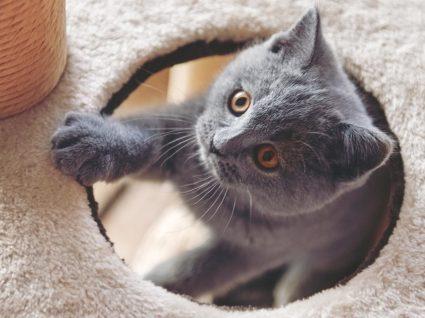 Tudo o que deve saber sobre diabetes nos gatos