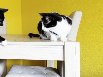 7 dicas para compreender o comportamento dos gatos