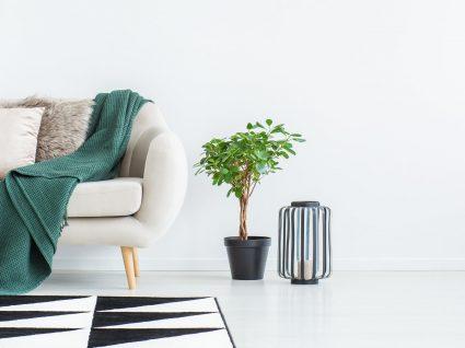 Decorar casa alugada: dicas para ter o glamour de uma casa comprada