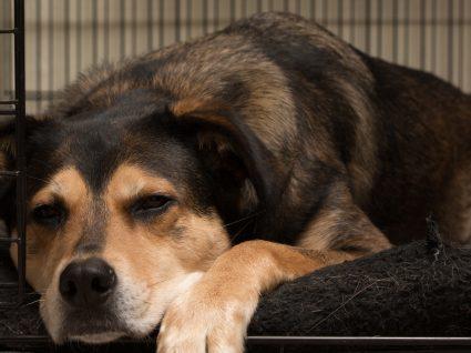 Denúncia maus tratos a animais: como fazer?