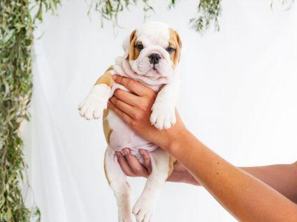 Nomes para cães: sugestões para escolher o nome do patudo