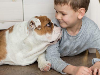 Bulldog personalidade: descubra 10 características desses cães