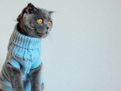 Roupa para gato: a solução para combater o frio do seu amigo felino