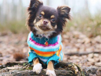 Roupa para cães: descubra os essenciais para o seu amigo