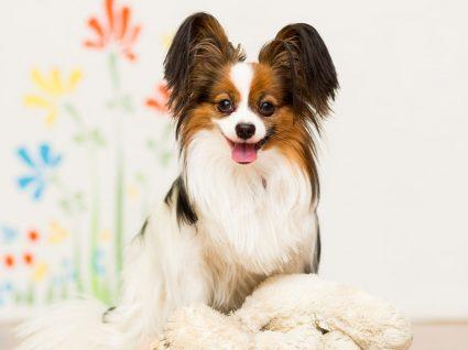 Raças de cães mais inteligentes: quais são?