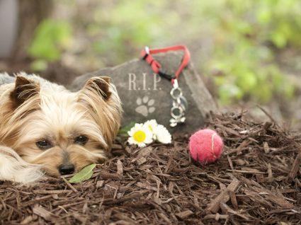 Cemitério de animais: saiba como e onde despedir-se do seu amigo