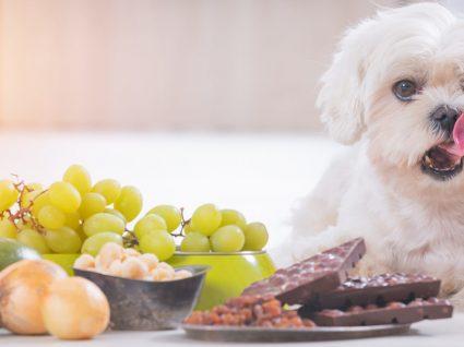 22 alimentos tóxicos para cães que não deve dar ao seu patudo