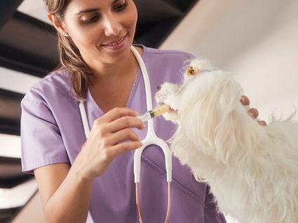 Antibiótico para animais: para que serve e quando administrar