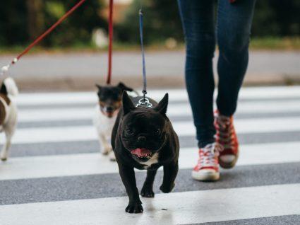 Passear o cão: benefícios e dicas para saídas mais tranquilas