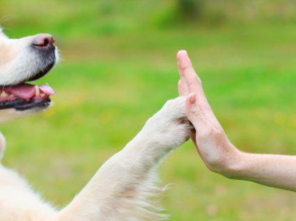 Saiba o que faz um treinador de cães e conheça alguns dos melhores