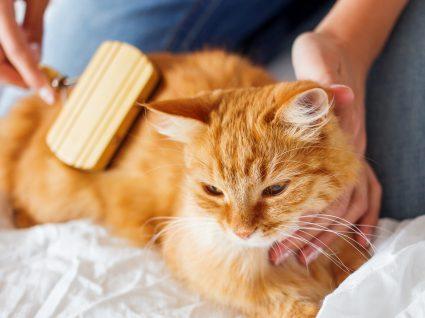 Como cuidar do pelo do gato: dicas e passos fundamentais