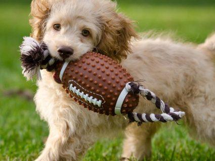 Descubra os melhores brinquedos para cães cheios de energia