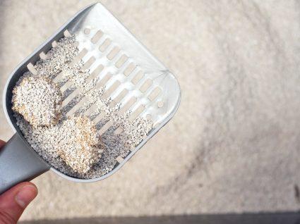 Qual a melhor areia para gatos? Nós dizemos-lhe
