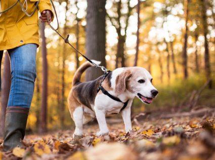 Como ensinar o cão onde fazer necessidades