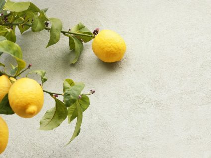Plantar limão em casa: aprenda o passo a passo
