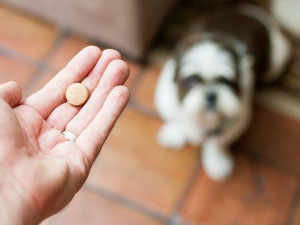Dar comprimido ao cão: como o fazer sem dramas?