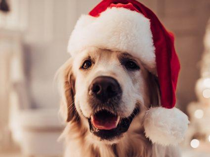 Ford apresenta casota de cão sem ruído: patudos calmos em noites festivas