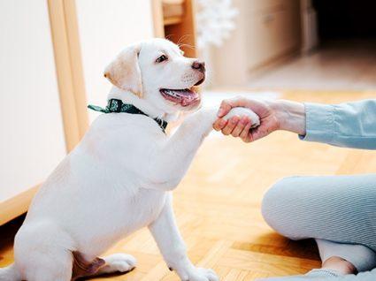 Reforço positivo em cães e gatos: tudo o que precisa de saber