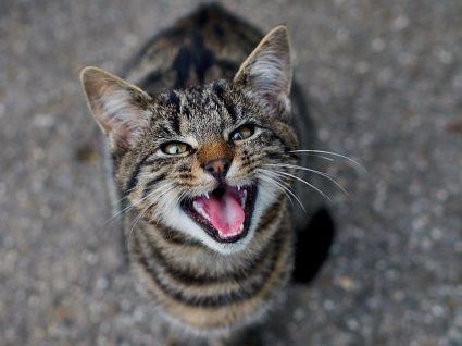 Tem um gato agressivo? Saiba como lidar