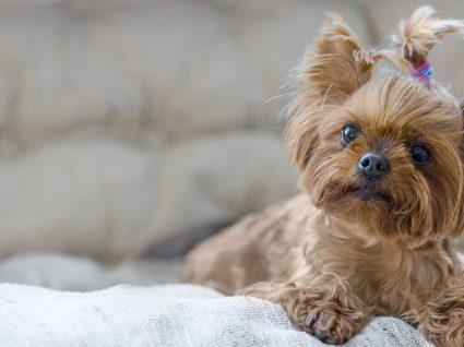 Nomes para cães pequenos: 92 sugestões que vai gostar