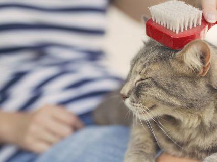 Escovas para gato: descubra a ideal para o seu felino