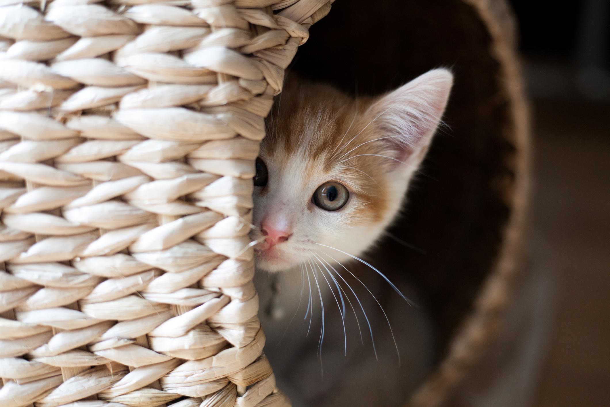 """Gatos e esconderijos: uma """"relação"""" fundamental"""
