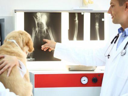 Displasia da anca em cães: tudo o que precisa saber