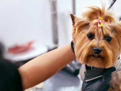 Beleza canina: a importância de cuidar da aparência e higiene dos cães