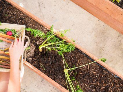 Horta urbana: 5 dicas para fazer a sua e o que plantar com pouco espaço
