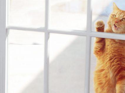 Como acalmar um gato stressado: 7 dicas essenciais