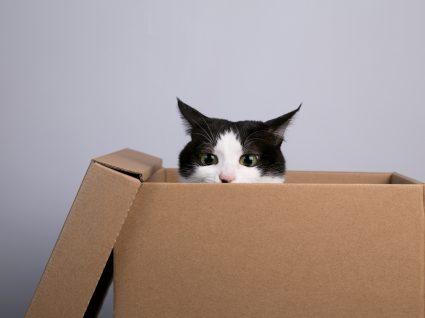 Como mudar de casa com um gato: o guia essencial