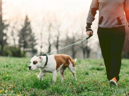 Sabe qual é o peso ideal do seu cão?