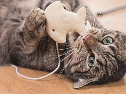 Enxoval para gatos: tudo aquilo que não pode faltar!