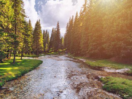 Emprego guarda-florestal: 200 vagas para preencher