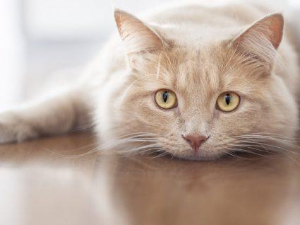 O gato não come? Saiba o que pode fazer