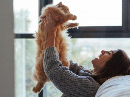 Será que os gatos refletem a personalidade dos donos? Vamos desvendar tudo
