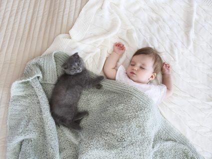 Gatos e bebés: alguns cuidados a ter