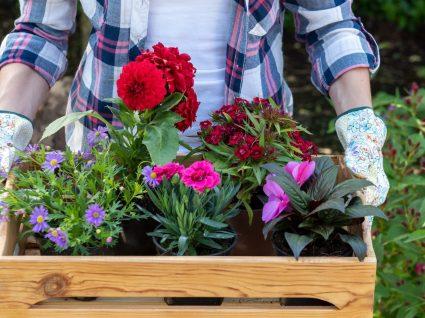 Conheça as principais flores de primavera e o seu significado