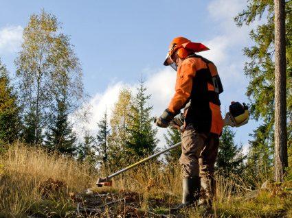 Limpeza de terrenos: legislação e tudo o que precisa de saber em 2019