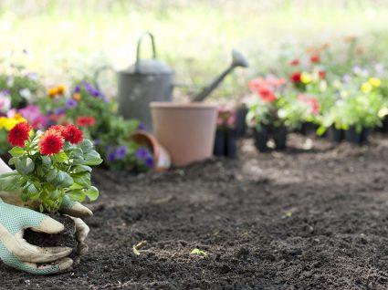 pessoa a plantar plantas