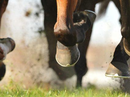 Quantos cavalos de potência tem um cavalo?